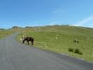 Auteur : Yannick P, Commentaire : Dernier kilomètre, avec les chevaux.
