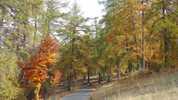 Author : Loic L, Comment : A 2 kms du sommet... magnifique en fin de mois d'octobre.