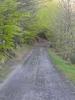 Montée : Pic de Fontfrède depuis Céret, Commentaire : En route vers la fontaine de Fontfrède