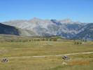 Montée : Col des Champs depuis Colmars, Commentaire : Le sommet avec ses troupeaux de vaches et son paysage magnifique