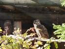 Author : Loic L, Comment : photo prise depuis la route sur le petit parc animalier...  Ce Grosse Scheidegg est vraiment épatant !!!