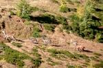 Auteur : Loic L, Commentaire : le Breithorn, ses paysages de rêve, ses biches et le brâme du cerf.  La totale !