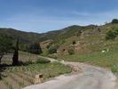 Montée : Col de Banyuls depuis Banyuls, Commentaire : Au milieu de la montée, entre les vignes