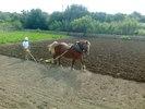 Auteur : Thomas F, Commentaire : Mallorca  - surtout au Nord-Est - est restée agricole.