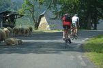 Author : Florent L, Comment : Des moutons sont présents dans la montée ! Gare à la descente.