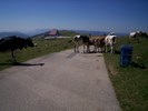 Auteur : Jean-david M, Reactie : ...Décidément, l'ambiance suisse est de mise :)
