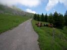 Montée : Col de l'Arpettaz depuis Ugine (via Mont Dessous), Commentaire : Un endroit paisible !