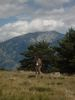 Author : Greg R, Comment : Le gardien du Canigou.