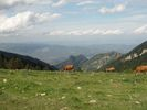 Montée : Refuge des Cortalets depuis Villerach, Commentaire : Clairière vers 1600 m, vue vers la vallée de la Têt.